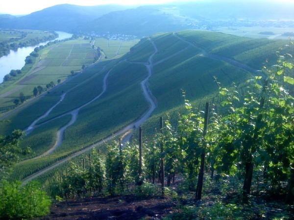 Vineyards in iPhone in Europe 08 by